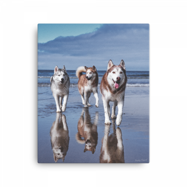 Husky Squad Lifes a Beach Canvas