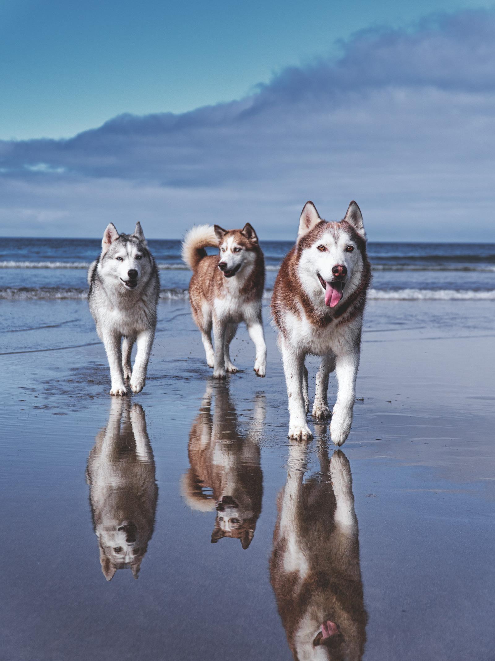 life's a beach husky squad