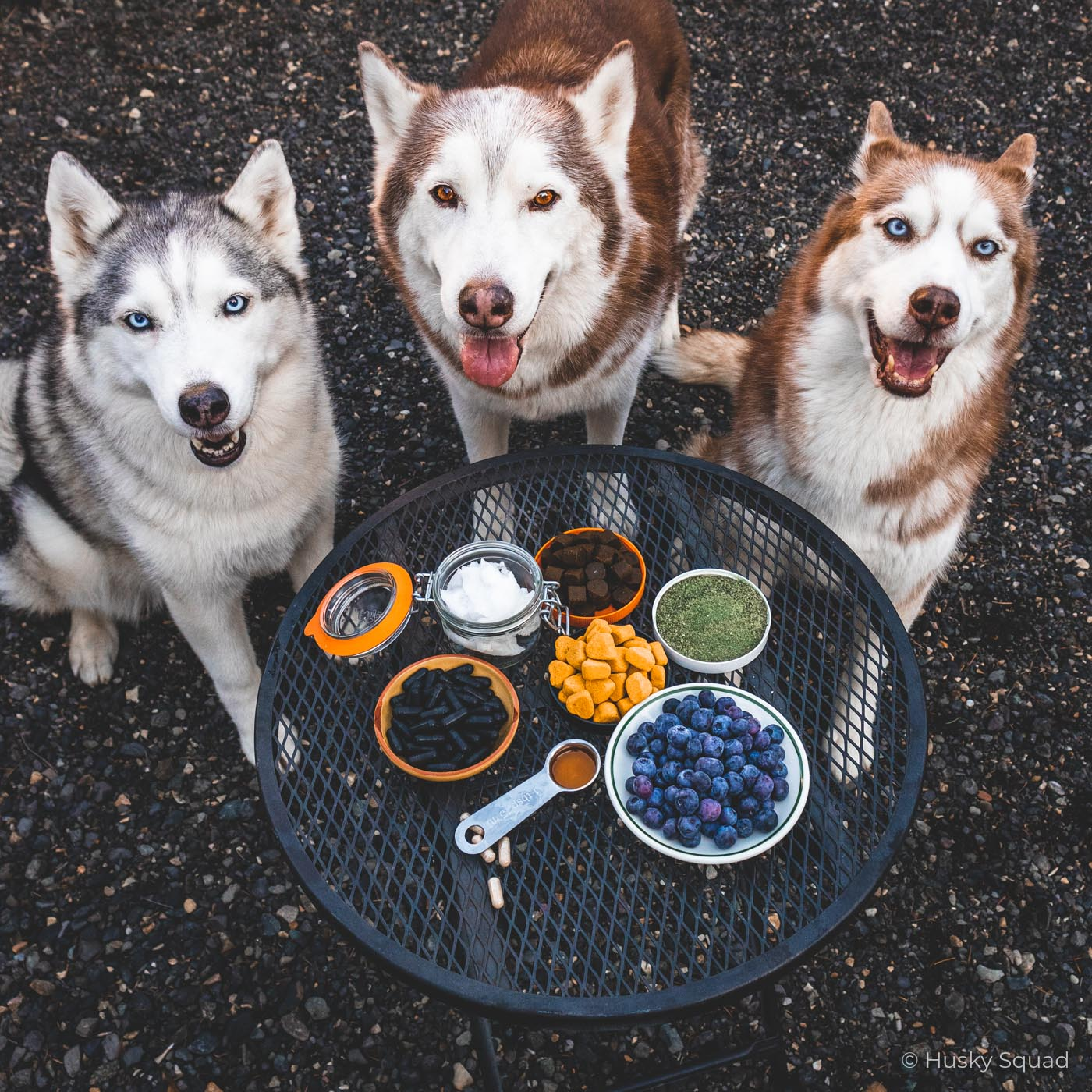 best supplements for dogs