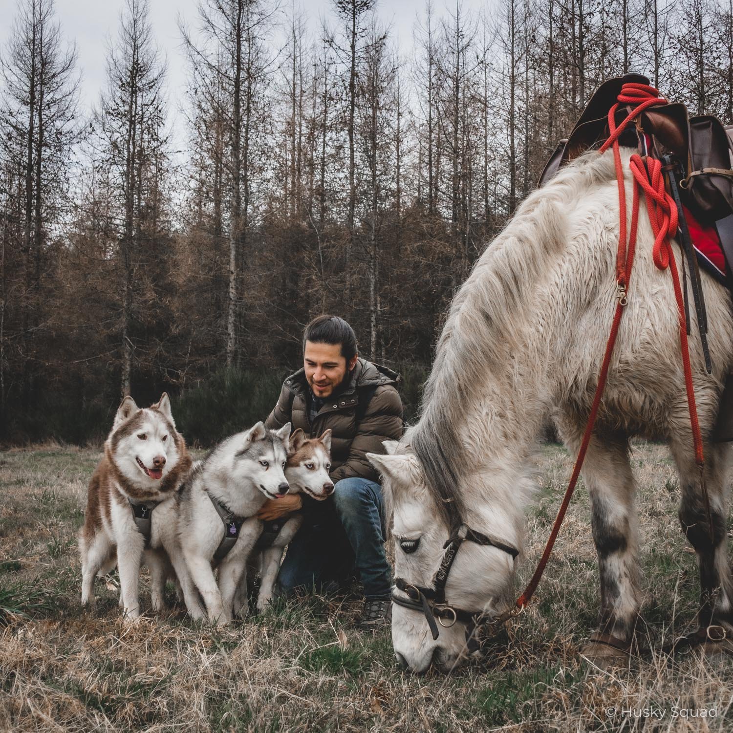 Jc with husky squad and horses in europe
