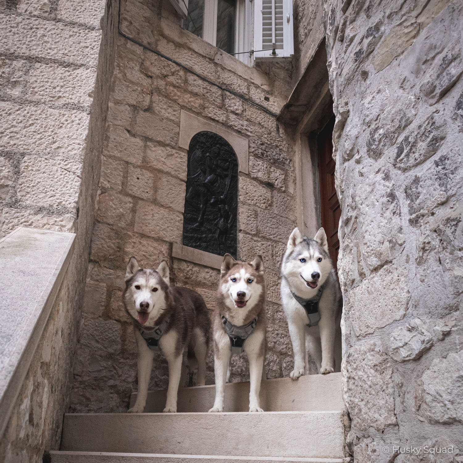 Split with Husky Squad
