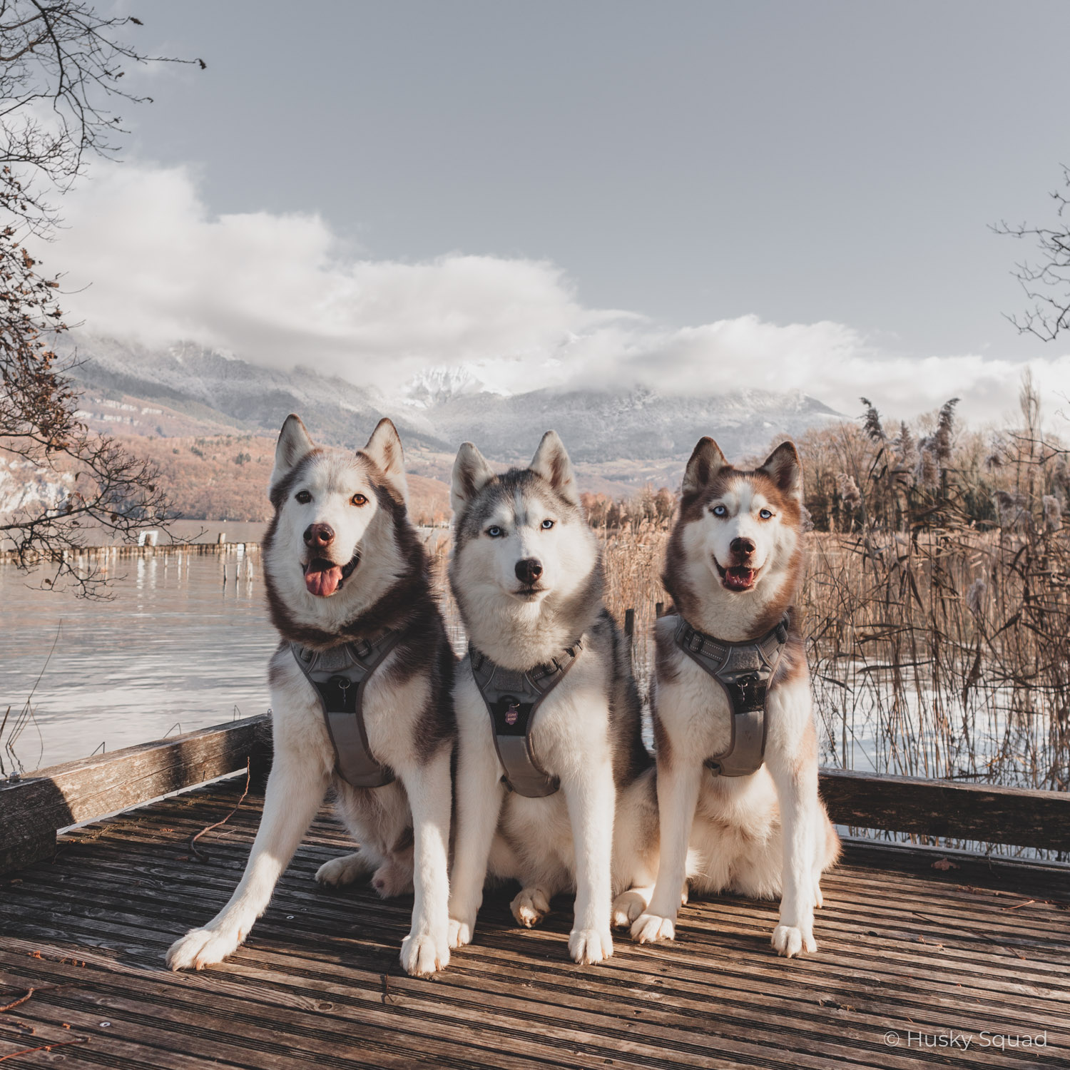 Lake Annecy with Dogs