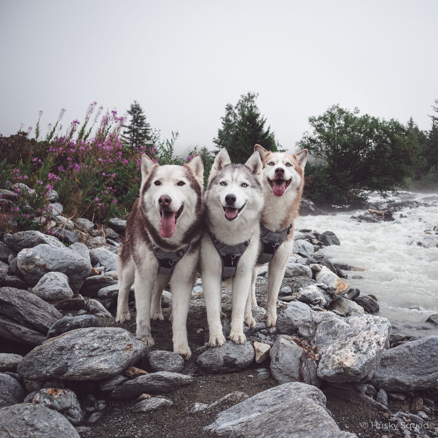 dreamy hiking trails in europe with husky squad