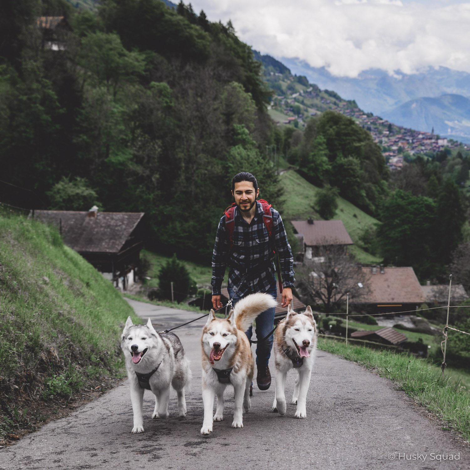 Switzerland with dogs